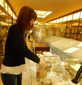 Amanda Jensen of the Vanderbilt curatorial staff conducts conservation work on a marine specimen Vanderbilt Museum photo